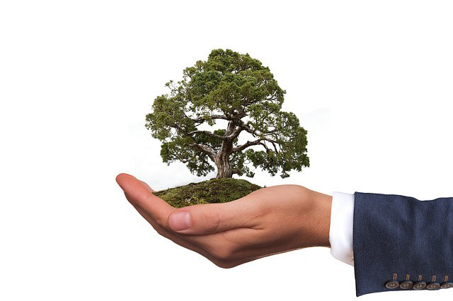 endoterapia arborea vegetal